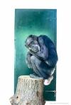 primate1_ZSEAAfricaAlive_180-0824